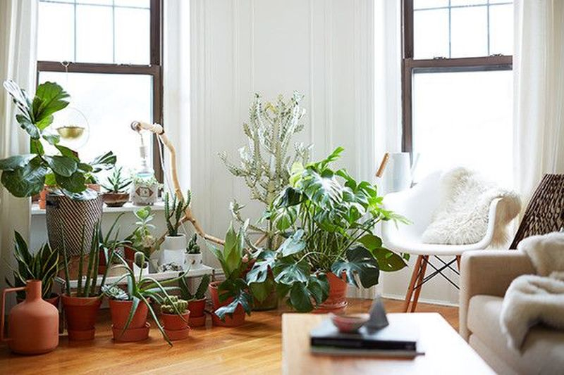 Houseplants to beautify your living room