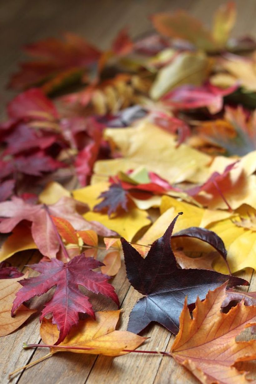 Autumn leaves craft table decoration
