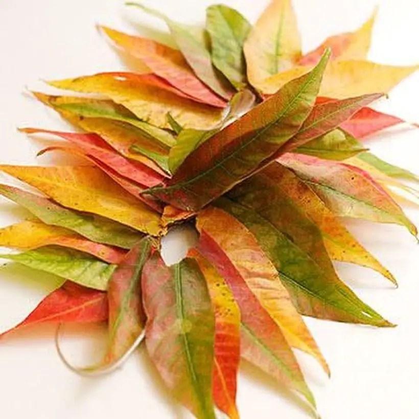Stunning autumn leaves craft