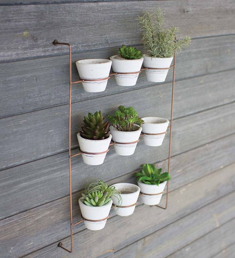 An awesome rack placement succulent ideas with iron rack, small white pot to look creative