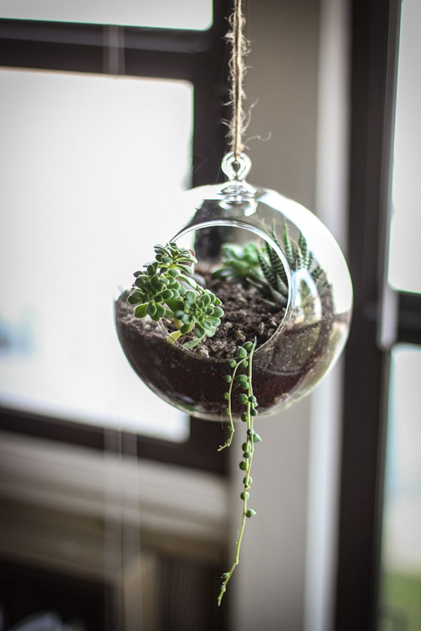 Small hanging succulent ideas with round pot to decorate the room