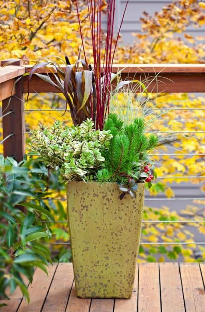 Small plants decoration for outdoor