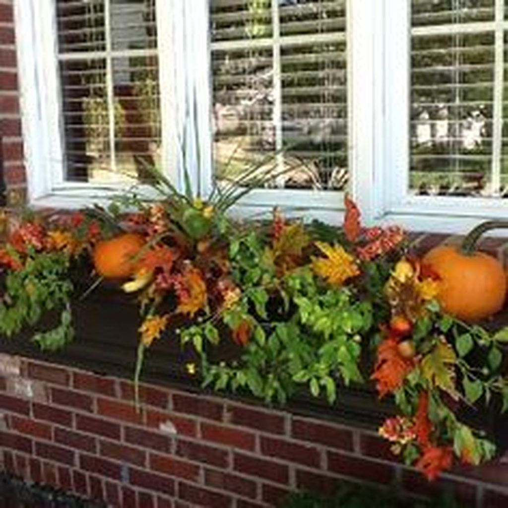 Window plants combined with pumpkins to perfect your outdoor design