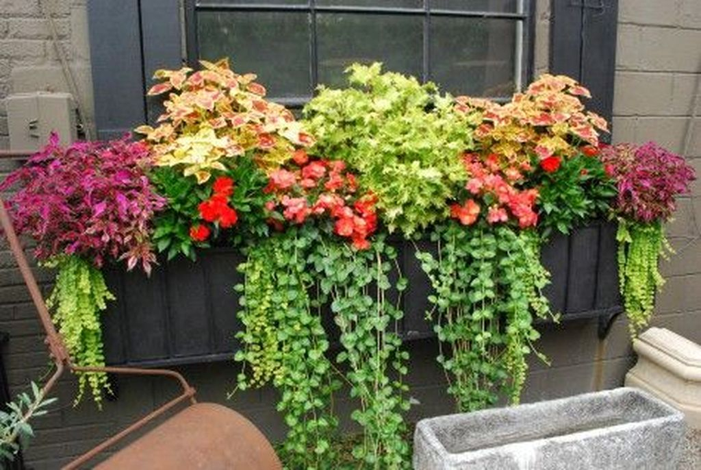 Window plants for fall decoration