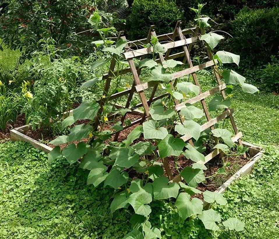 Rustic wooden trellis for garden