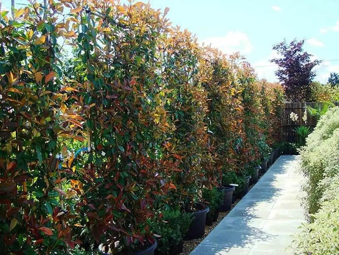 Garden screen ideas with climbing plants