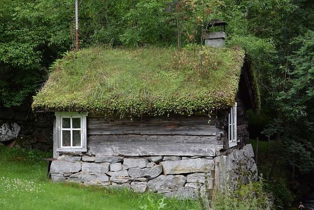 Wooden shed with roof plants