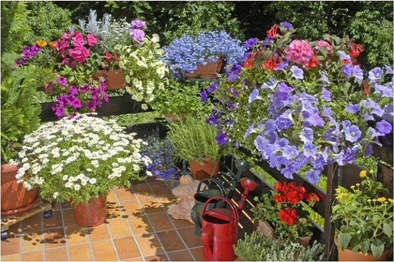 On-the-balcony-floor-use-decorative-pots-hanging-baskets-are-compulsory-too.-you-can-grow-flowers-herbs-and-even-tomatoes-in-hanging-baskets.