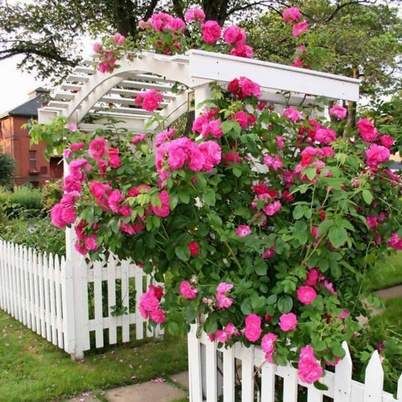 Design-your-own-rose-garden