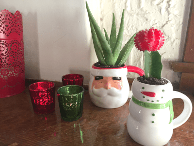 Christmas-cactus6