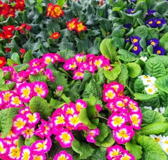 2-annuals-vs-perennials-flowers-735x701-1