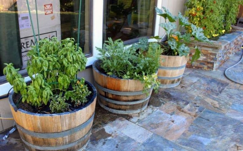 Unique wine barrel garden ideas and wine barrel container gardening edible front yard