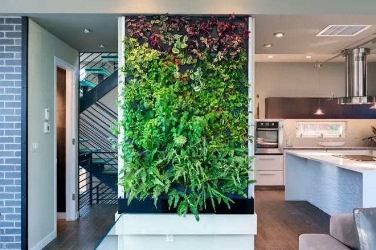 Kitchen-plant-2