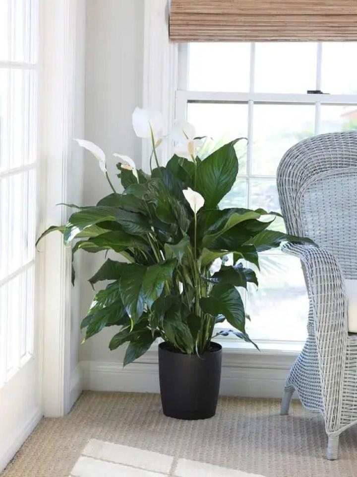 Plant-1-3