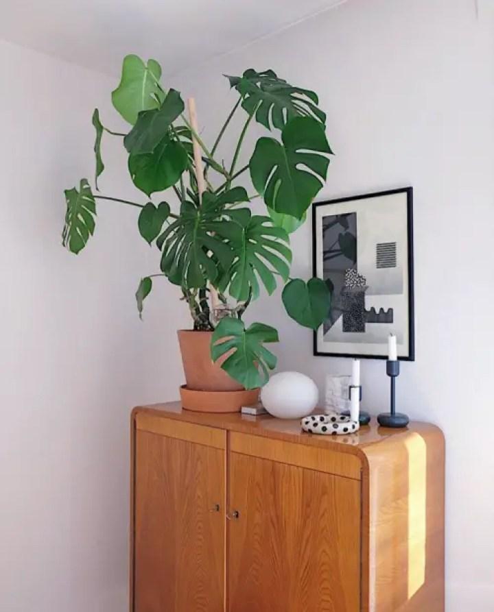 Plant-5-3