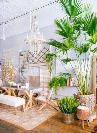 Large-palm-tree-inside-bohemian-dining-room