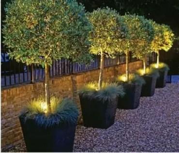 Gardenplantswithaccentlighting