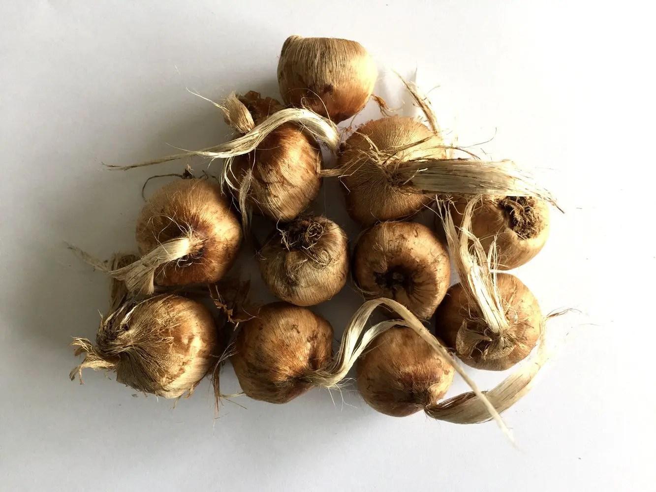 Crocus-sativus-saffron-bulbs-2_x2000_crop_center