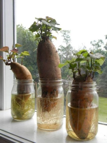 Diy-indoor-container-water-gardens