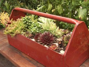 Gby1905_1a-succulent-toolbox_s4x3_lg-e1402424070568