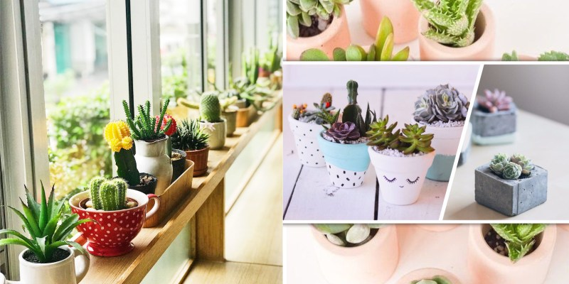 Pretty succulent planting arrangement for your winter greenery
