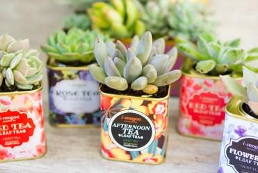 Succulents-vintage-tea-tins-1
