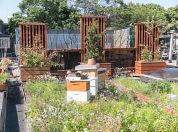 Amazing rooftop beekeeping