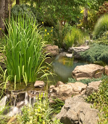 Pond, small waterfall and stream Innovative Landscape Ideas For Water Features To Create A New Look