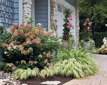 Pretty pink garden for an easy and elegant garden color theme 1