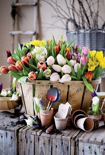 Wooden basket of tulips Bring Your Spring Vibe More For Home Decoration With The Beauty Of Tulips