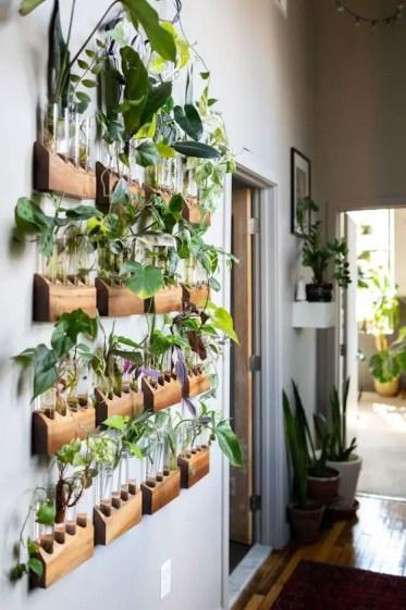 Test-tube-wall-garden