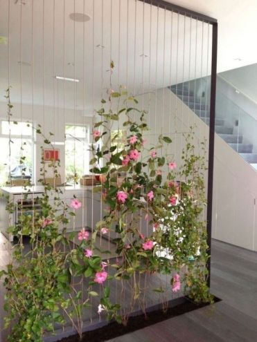 Beautiful-indoor-house-plants