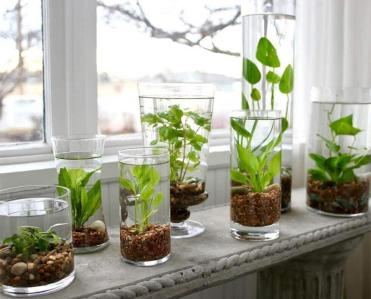 1-06-glass-vases-used-as-water-gardens