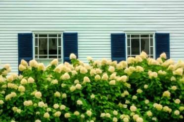1-shutter-windows-hydrangea-hedge-apr082020-min
