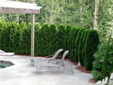 Garden-privacy-protection-hedge-plants-pool-terrace