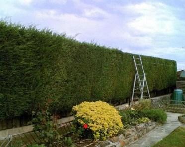Hedge-cutting-garden-maintenance-plants
