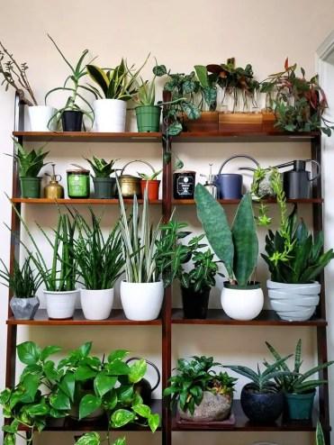 Plant-shelves-domino-houseplant-journal