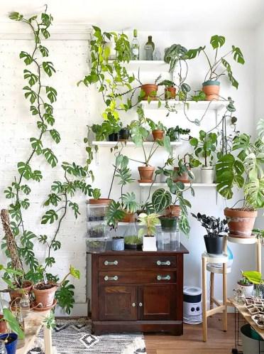 Plant-shelves-domino-jamesrenaud