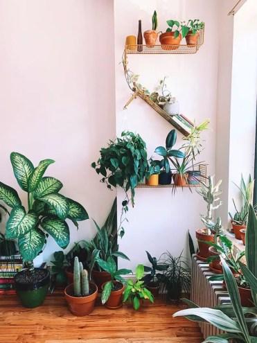 Plant-shelves-domino-plantkween