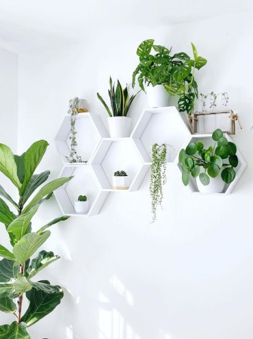 Plant-shelves-domino-thosepositiveplants