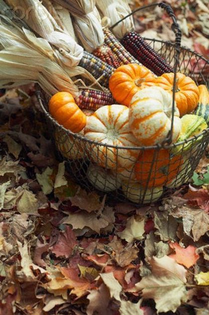 11-a-wire-basket-filled-with-gourds-and-corn-plus-corn-husks-for-outdoor-or-indoor-decor