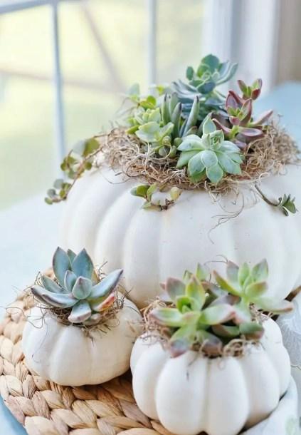 1506106727-succulent-pumpkin-planters-1