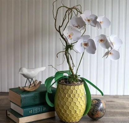 Paper-orchids