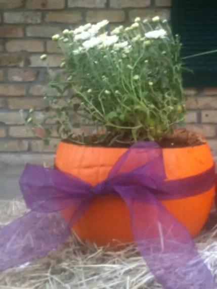 Pumpkin_planter_13_m20