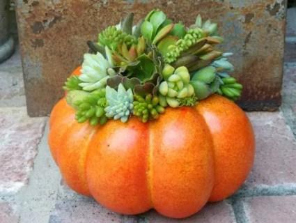 Succulent-pumpkin-planter-tobieanne-on-etsy-600x450-1