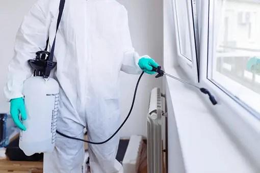 Home-pest-control