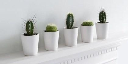 Zimmerpflanzen1-1523287878