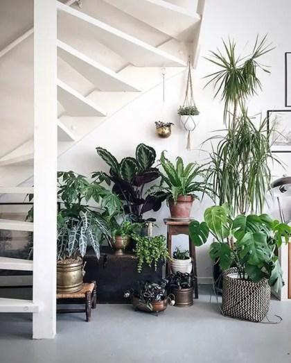 Zimmerpflanzen-Ideen-unter-der-Treppe