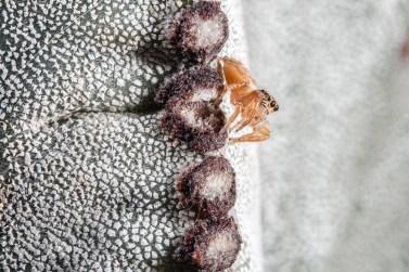 Araña en un cactus. © mateoht 1990-2013 - http://lafotodeldia.net