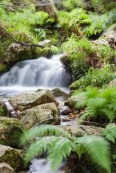Bosque en Pola de Laviana, Asturias. © mateoht 1990-2013 - http://lafotodeldia.net